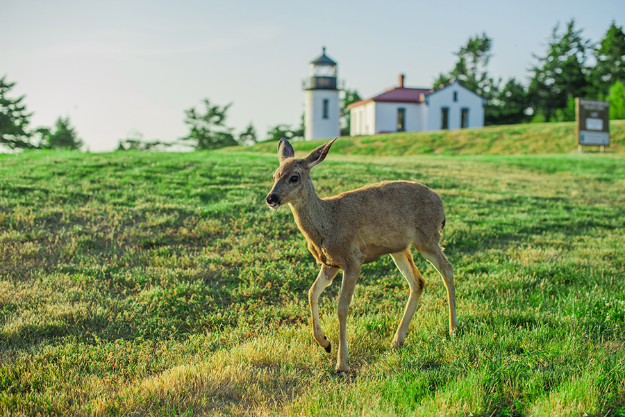 Fort Casey Inn Vacation A Yearling Passes By