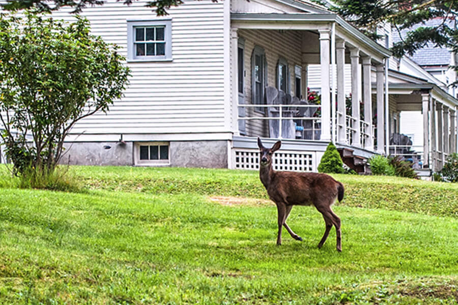 Fort Casey Inn Deer